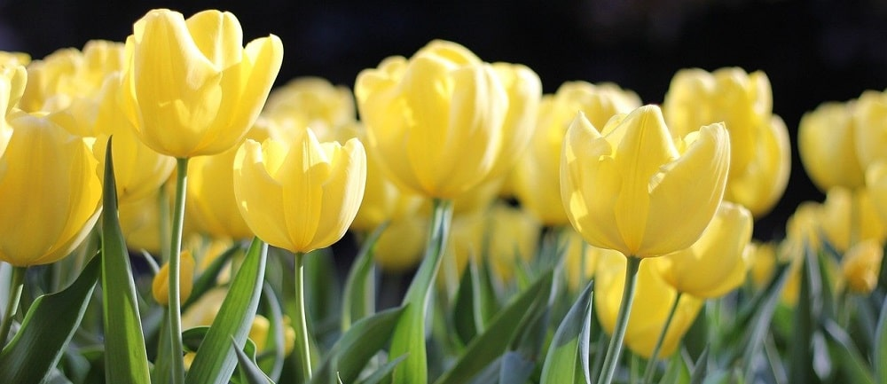 million flowers laylow